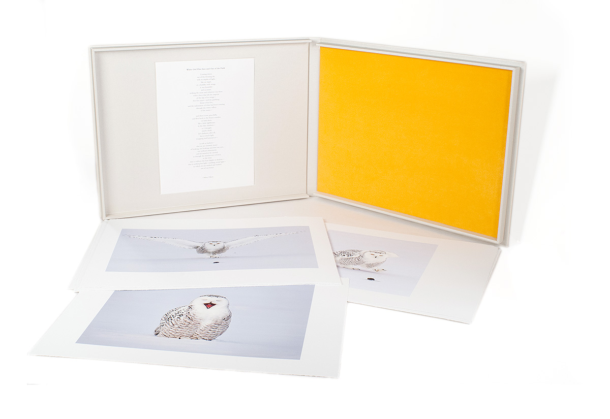 Snowy_owl-book