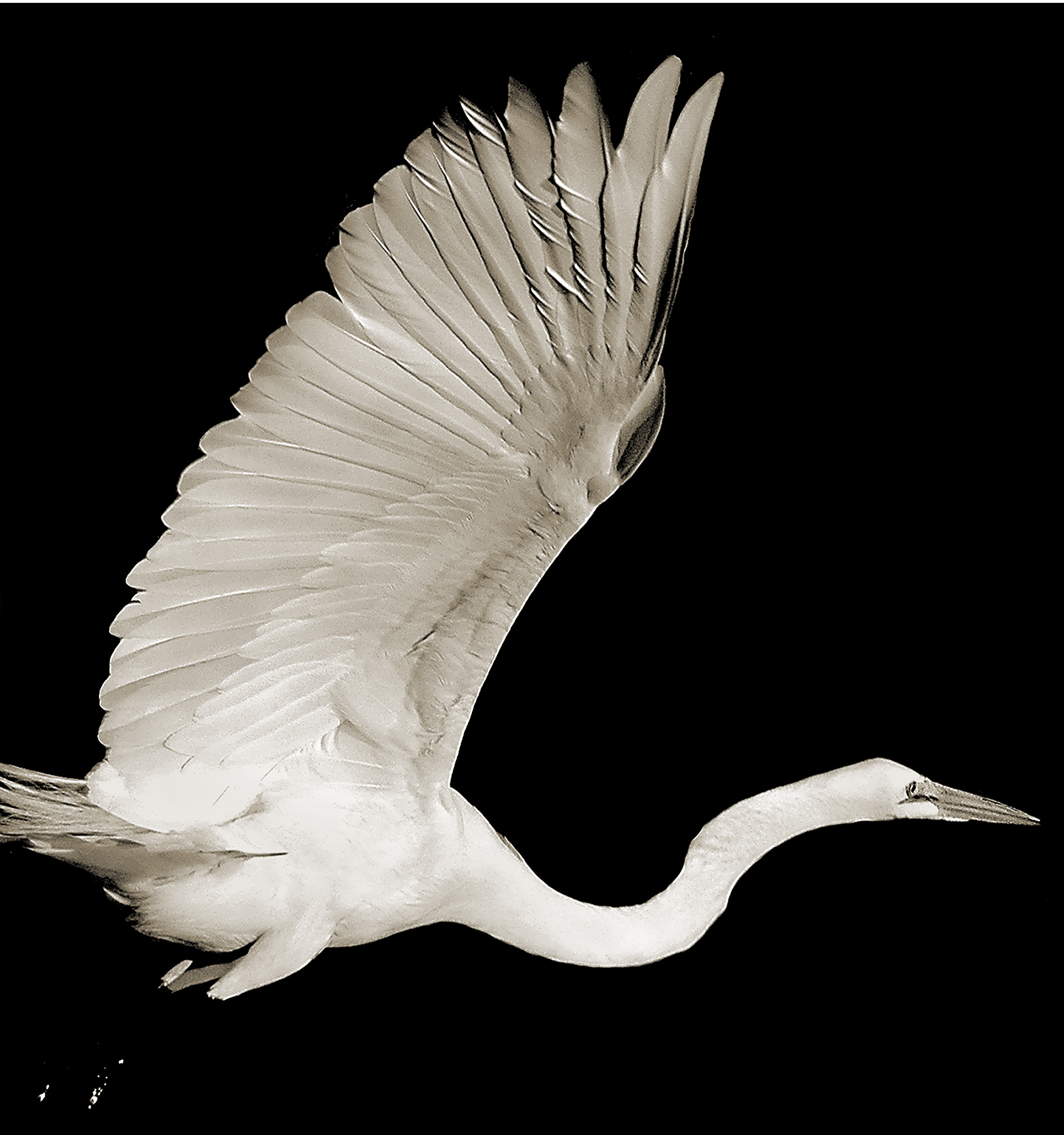 Terry-Turrentine-Egret-1-MN