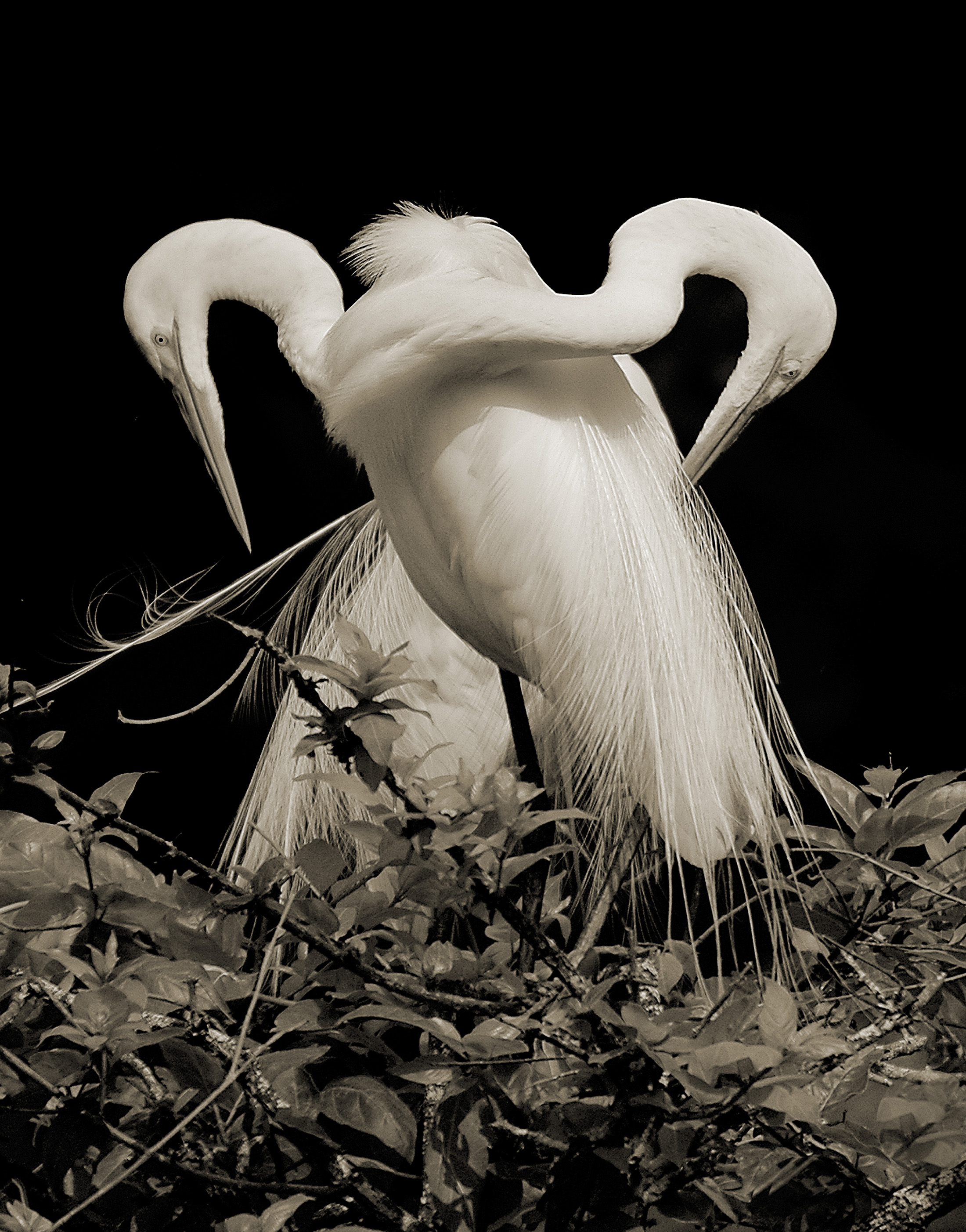 Terry-Turrentine-Egrets-06-LA