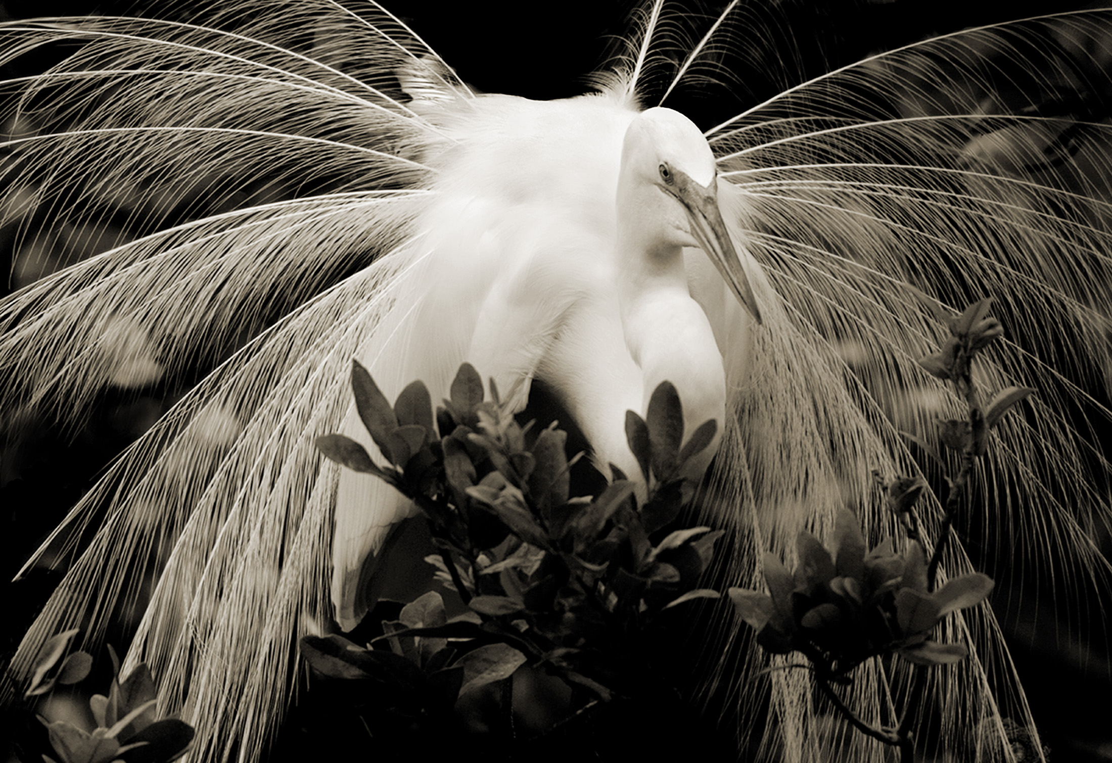 Terry-Turrentine-Egrets-07-LA