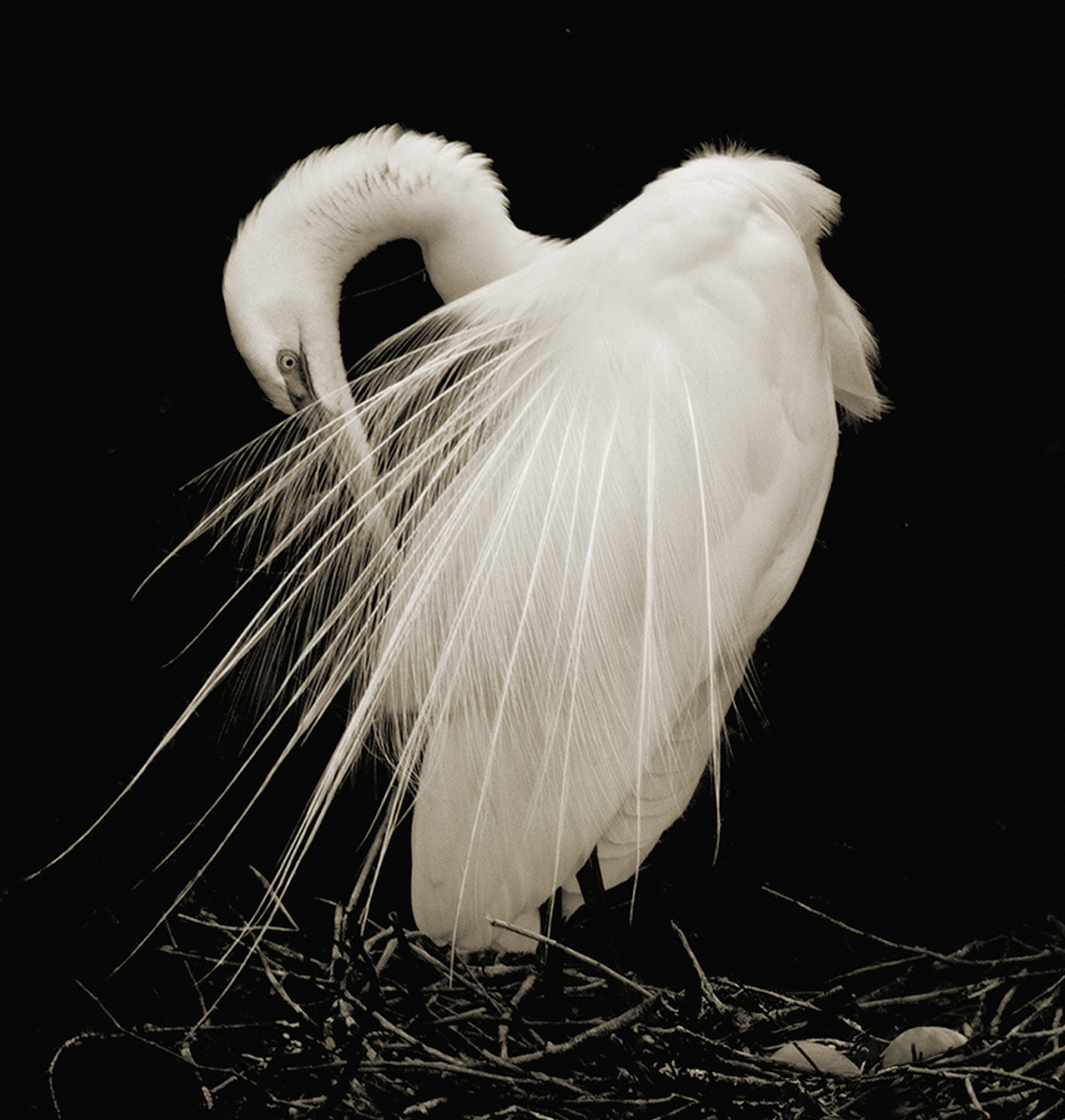 Terry-Turrentine-Egrets-08-FL
