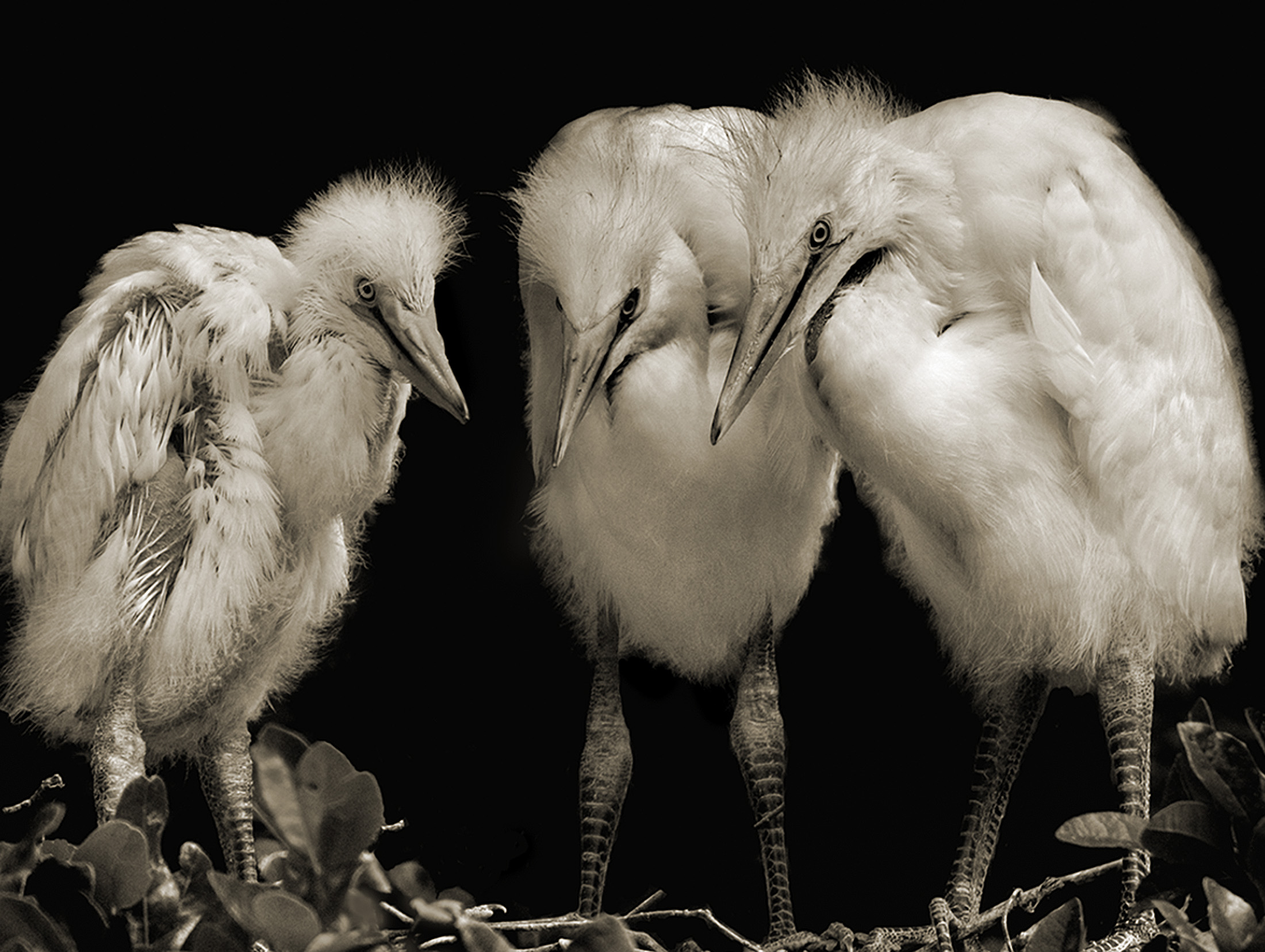 Terry-Turrentine-Egrets-10-LA
