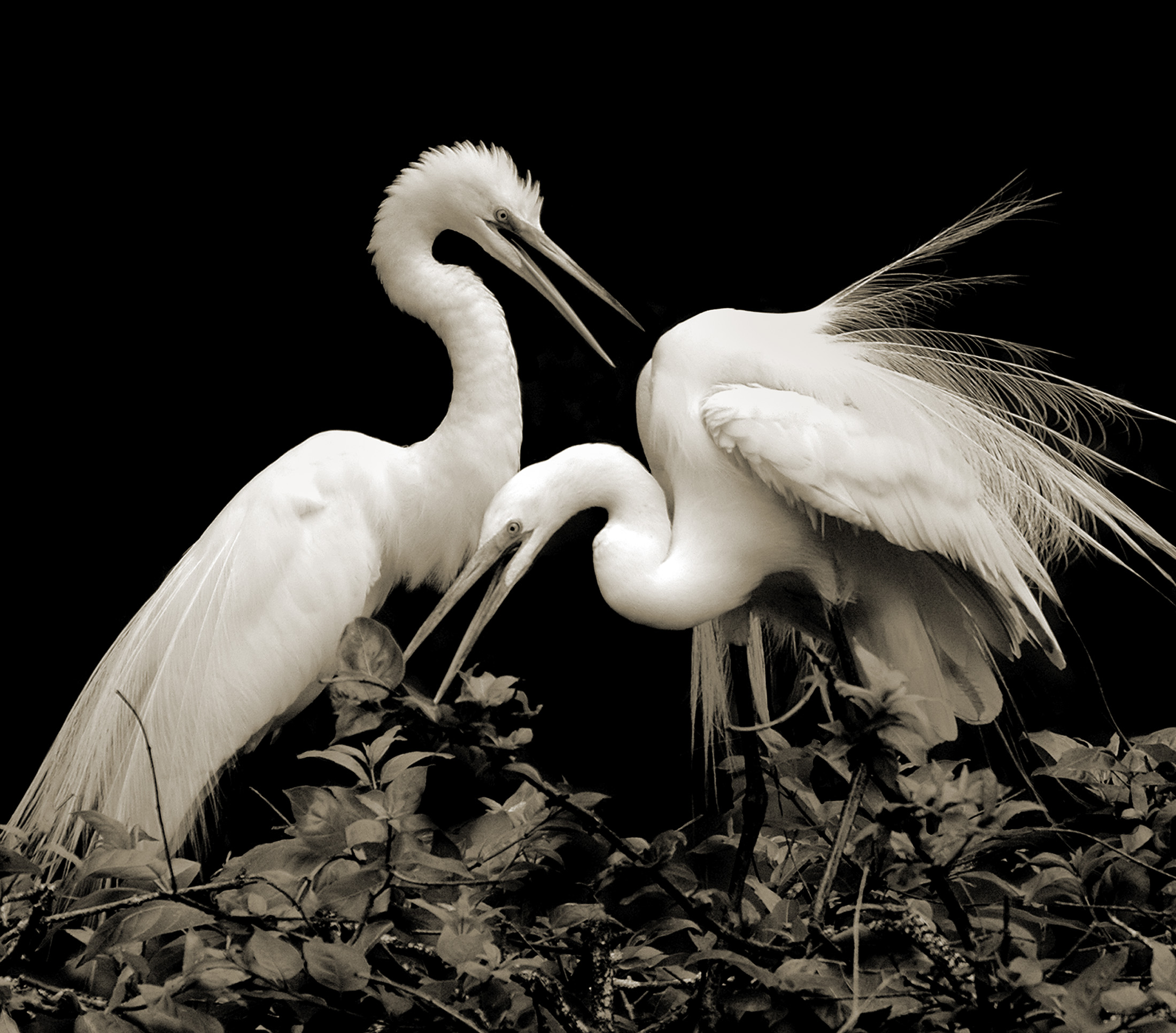 Terry-Turrentine-Egrets-11-LA
