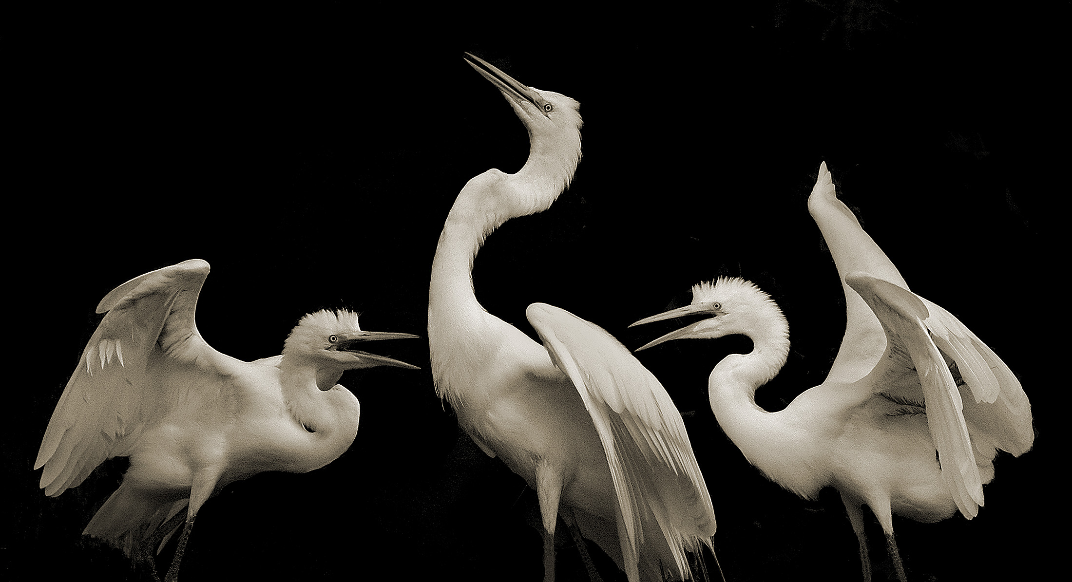 Terry-Turrentine-Egrets-12-LA