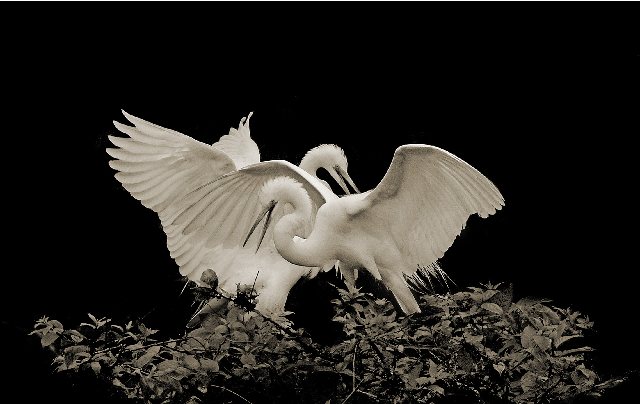 Terry-Turrentine-Egrets-13-LA